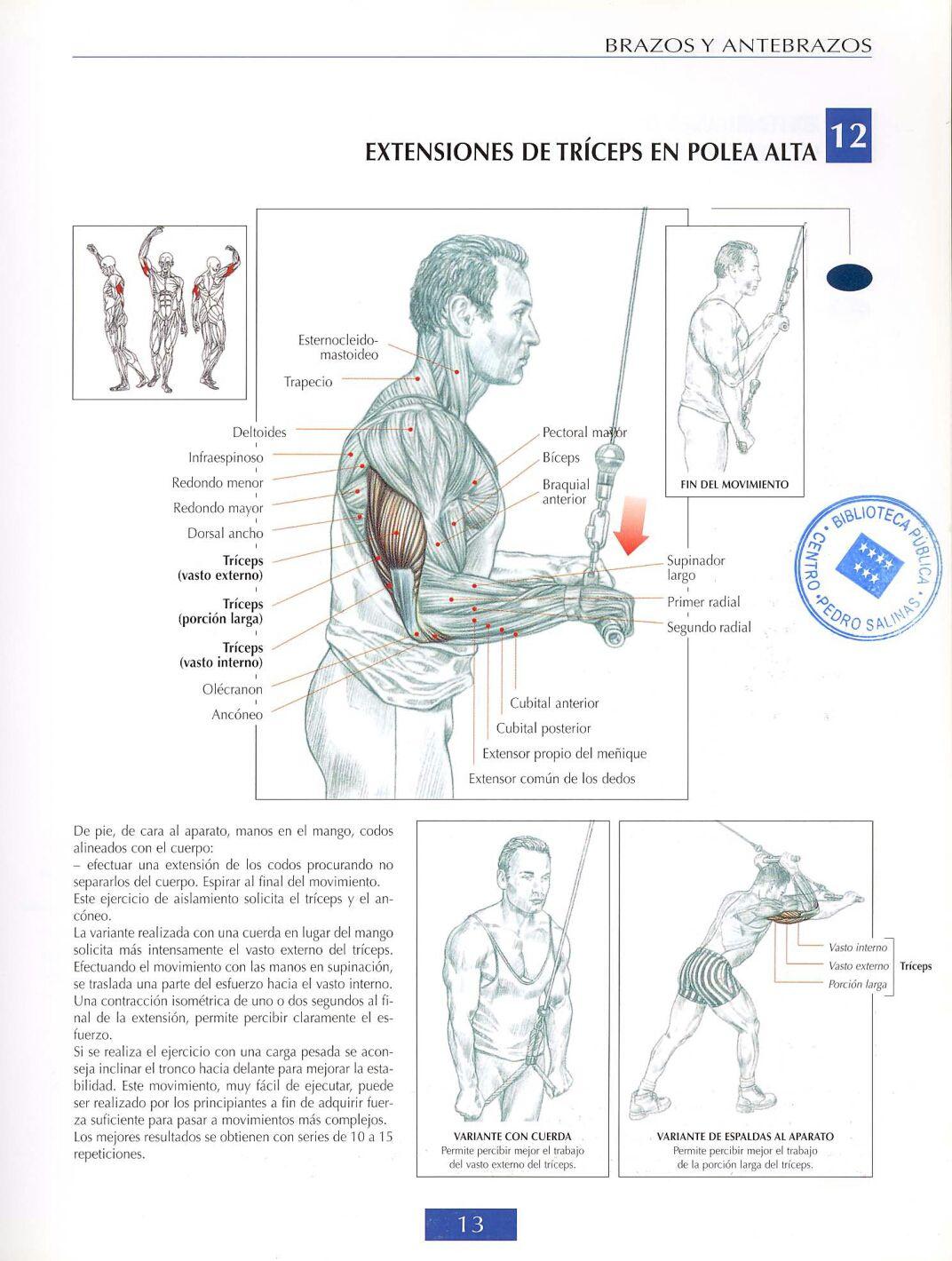 ejercicios+de+antebrazo+gym