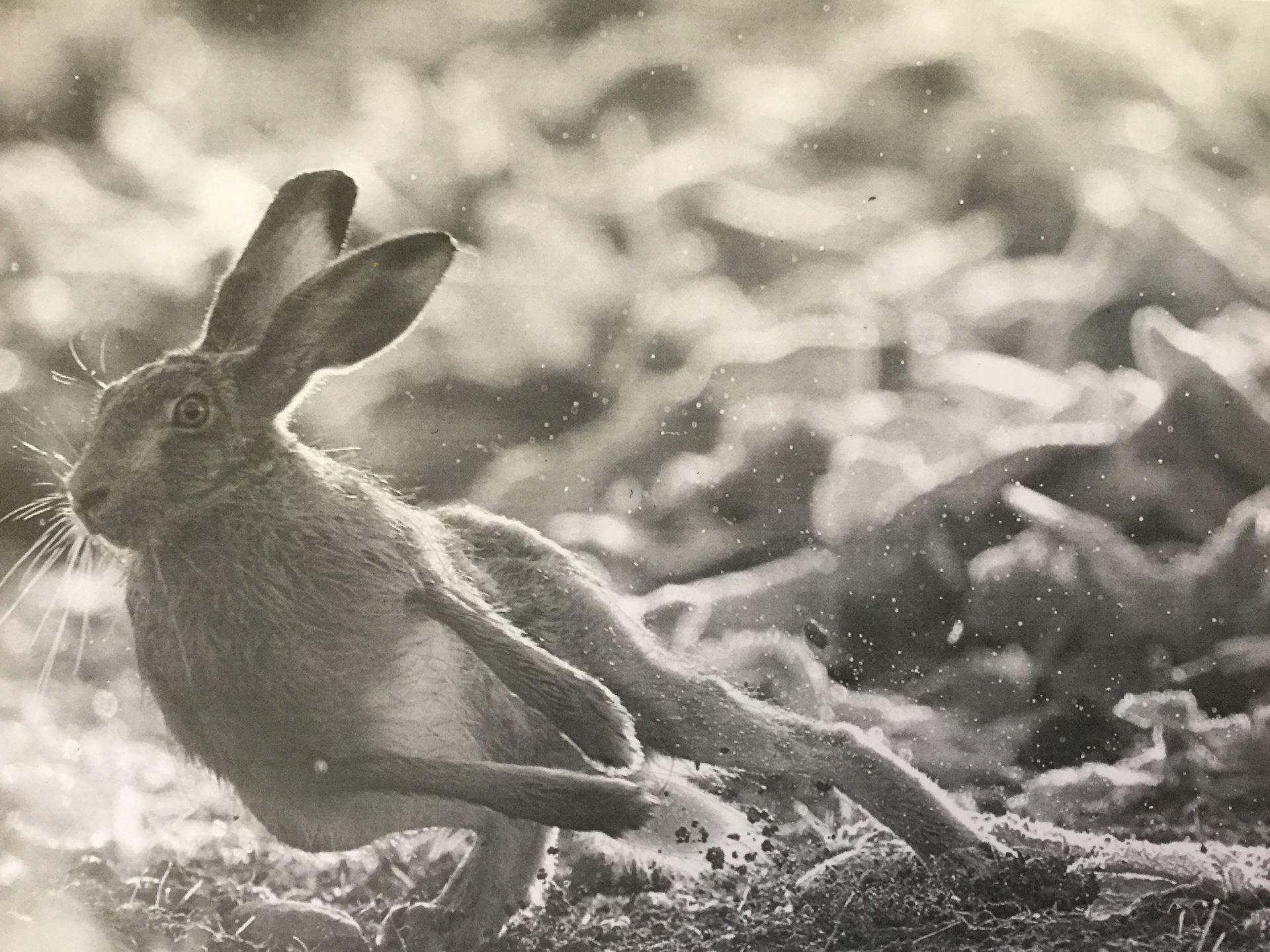 Картинки бегущих кроликов