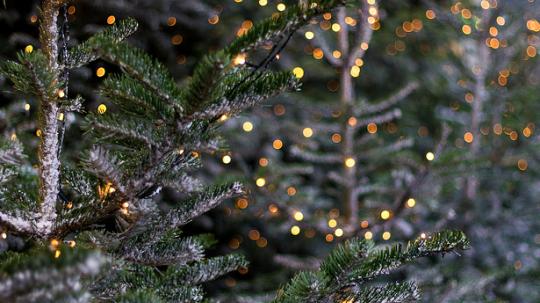 Heath Hussar Imagines Christmas Tree Wattpad