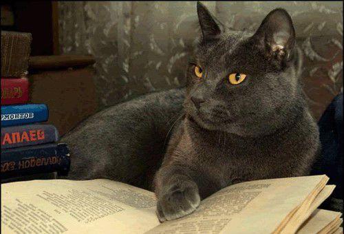 Tu te fous de moi ? Qu'ils aillent s'acheter une vie tous les deux oui ! C'est pas croyable comme vous êtes compliqués, vous les humains ! Devenez des chats c'est bien mieux !