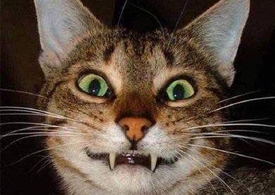 Hình minh hoạ miệng mèo nhỏ trên weibo Chim Xanh