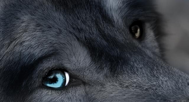Las leyendas afirman que solo se deja ver cuando hay luna llena, momento en el que recorre los montes y ciertos parajes deshabitados en busca de víctimas humanas (particularmente viajeros) o animales; casi siempre bajo la forma de un lobo