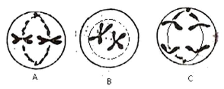 Biologi Sma Latihan Soal Dan Pembahasan Selesai Bab 28 Reproduksi Sel Wattpad