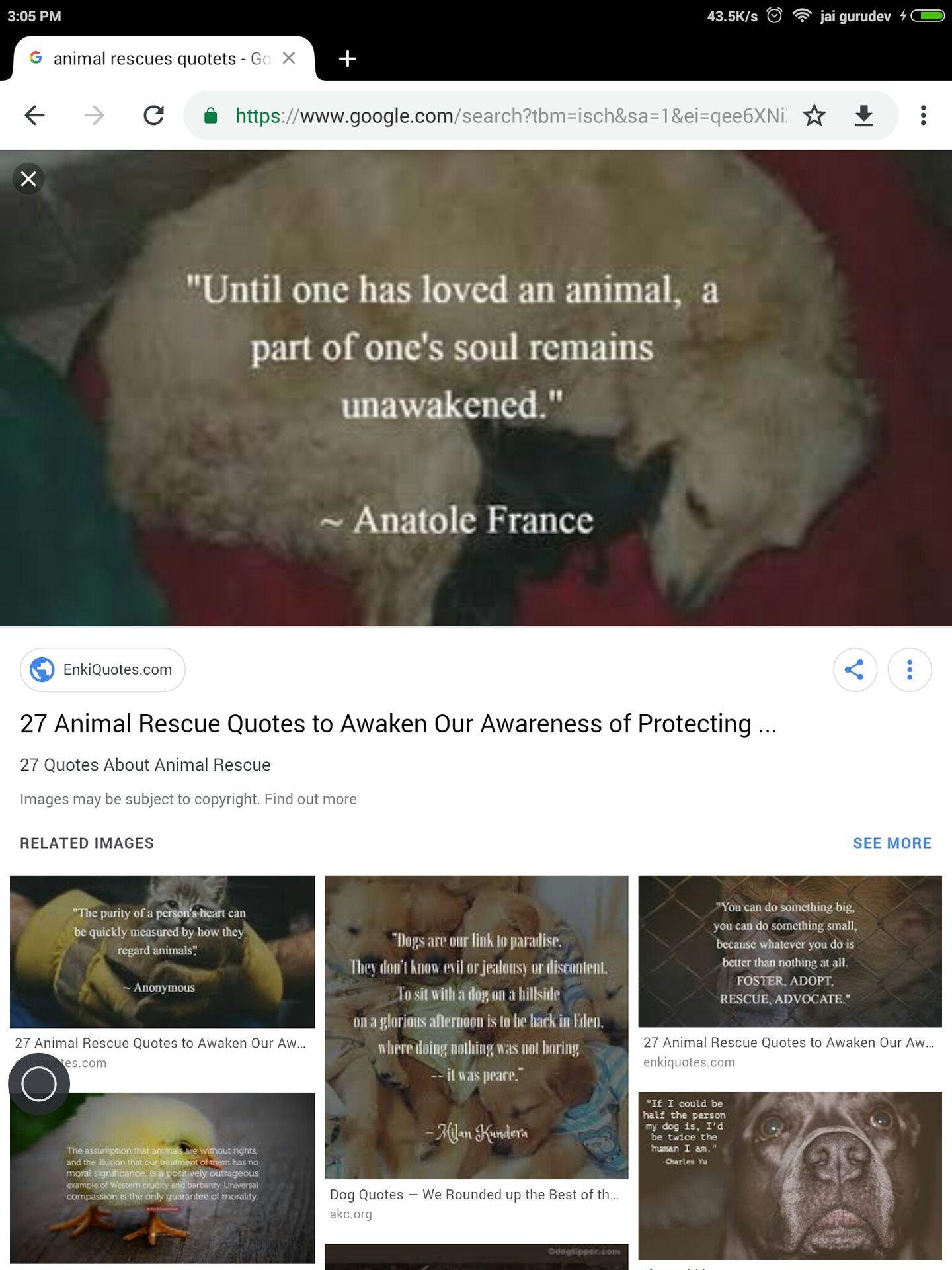 My Rescue/ Pet Animals - quotes - Wattpad