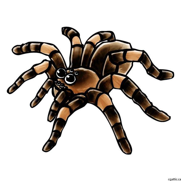 That's right everyoneIm in factA tarantula with googly eyes