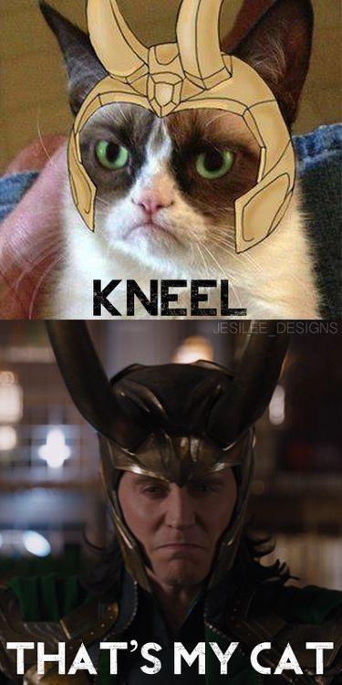 God of Thunder: Loki you have a cat?