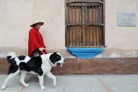 Walter De mendoza, presidente de la Fundación Nevado, señala que este perro tuvo su origen hace aproximadamente 400 años, en la cordillera andina del estado Mérida, especialmente en el paramo de Mucuchíes-Odviamente-