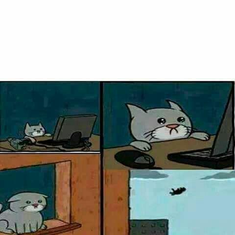 Plantillas Para Hacer Memes Meme Del Gato Wattpad