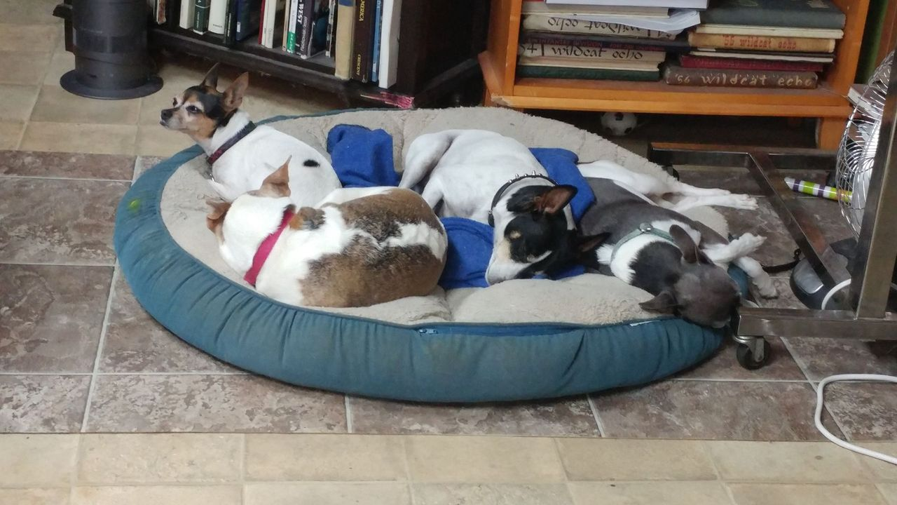 From the left: Pooka, Scooter, Harley, and Pixie