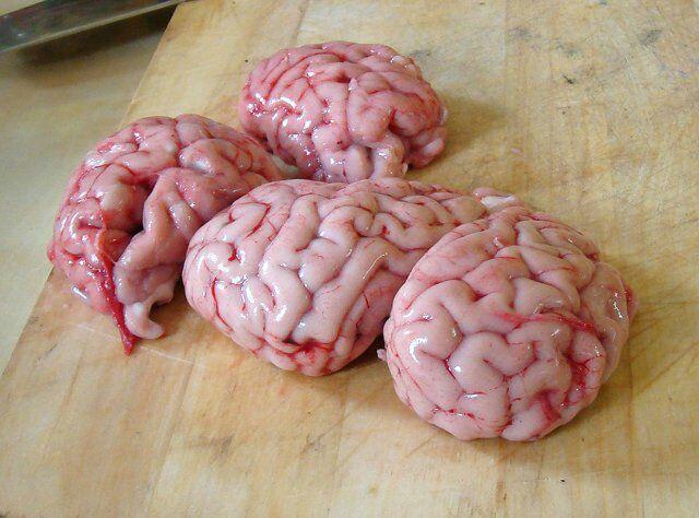 мозги свиные рецепт приготовления фото