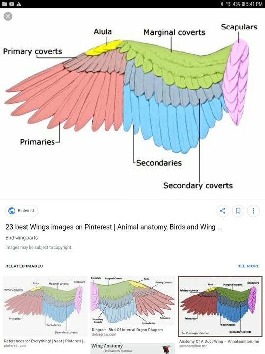 Art and random 2 - Angel wing anatomy woop - Wattpad