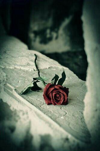 Te de volvieron una rosa roja marchita