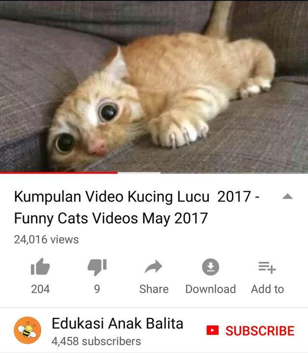 Merinding kucing download