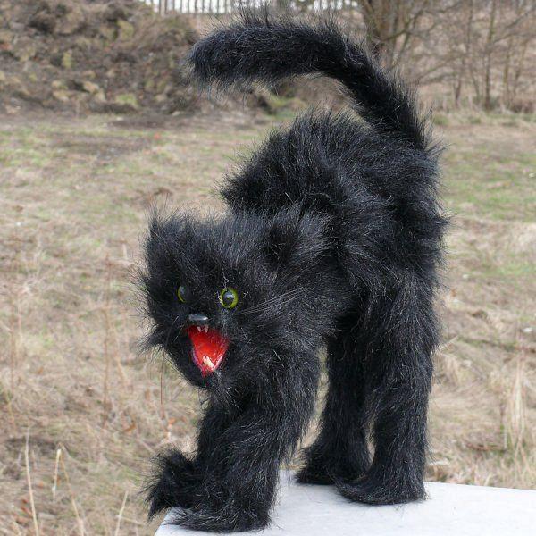 Mačička čierne Teens