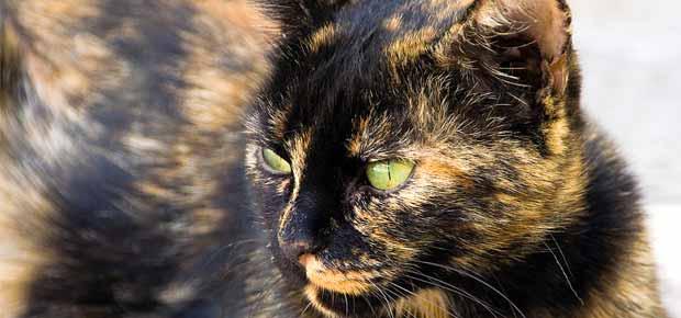 épais ébène chatte pics photos de cul noir