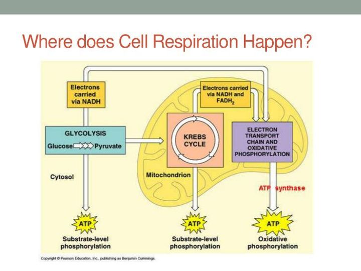 Photosynthesis and cellular respiration diagram of the this image does not follow our content guidelines to continue publishing please remove it or upload a different image ccuart Choice Image