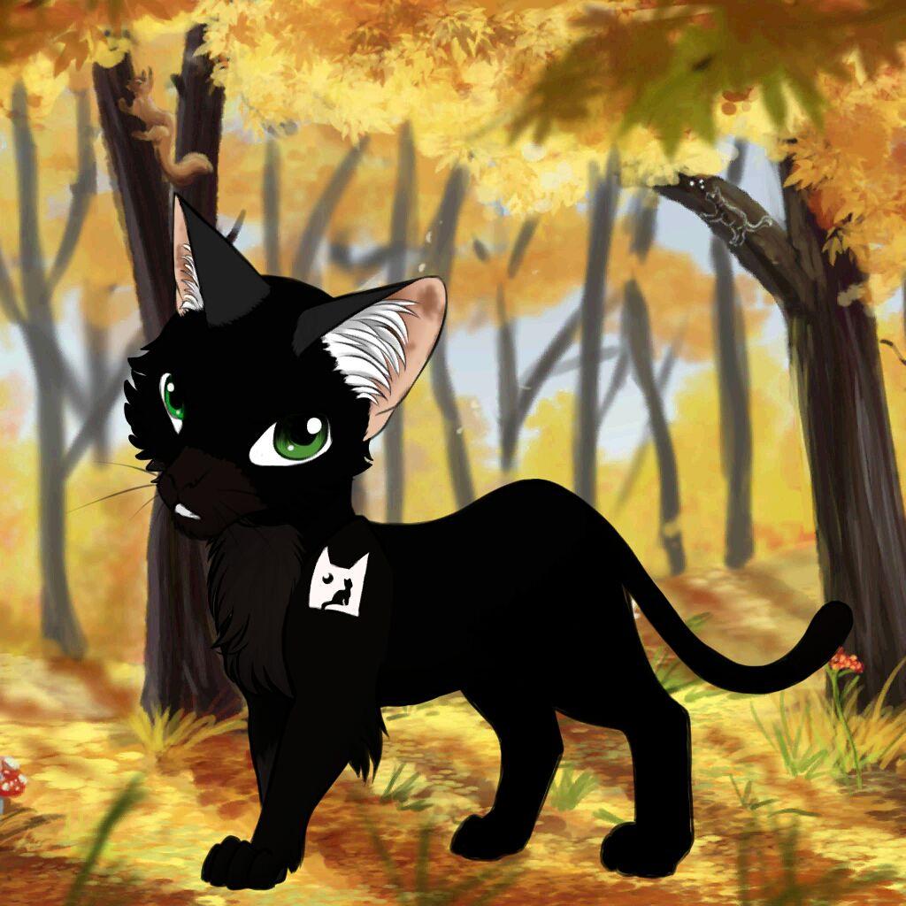 Černá propíchnutá kočička
