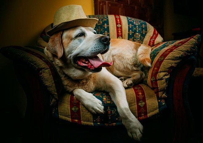 W związku z bliską przynależnością do sfery zaświatowej do dziś można spotkać słowiańskie wierzenia, według których psy mają możliwość widzenia zjaw, złych duchów i wyczuwania śmierci, dzięki czemu mogą ostrzec swych właścicieli przed niebezpiecze...
