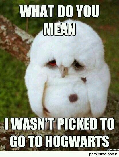 owl humor reading - photo #39
