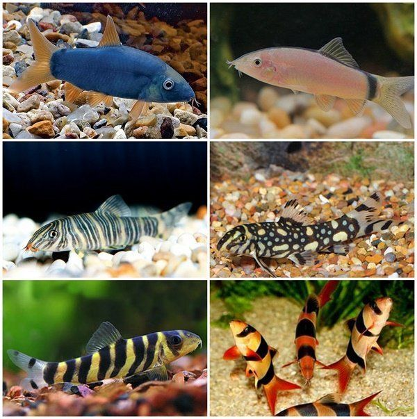 Think Outside the Tank: Fishkeeping Made Simple(r) - The