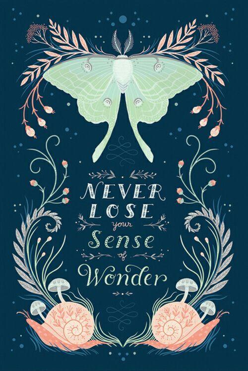 (Wacht, ik kom er net achter dat bijna al deze covers zijn gemaakt door Lisa Perrin (alleen die van The Graces niet), een illustrator die dingen maakt als deze: