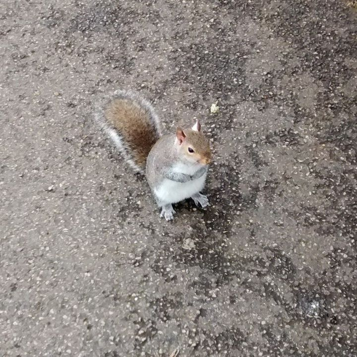 My walk took me through Hyde Park, where—given that it was still a workday morning—mostly just tourists and retirees roamed the labyrinthine paths, dodging the occasional squirrel begging for a treat