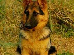 León continuaba fiel junto a Marcos, pero ya transformado en padre de cinco hermosos cachorros junto a Canela