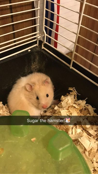 (Time Skip Brought To You By Sugar The Hamster)