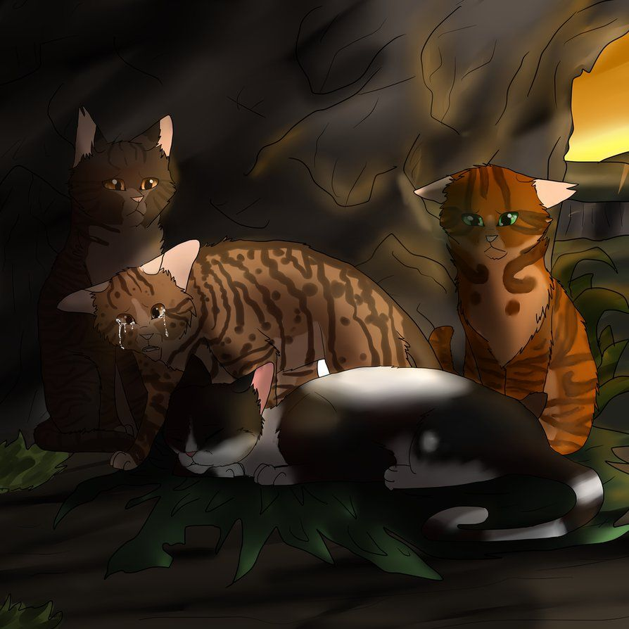 Warrior Cats Last Words Tallstar Wattpad