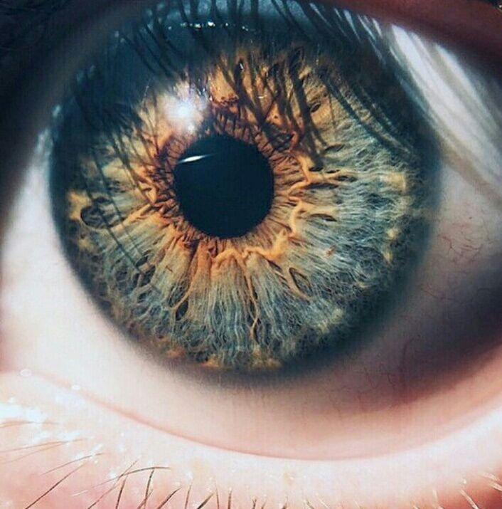 картинка глаза синие и карие глаза чего