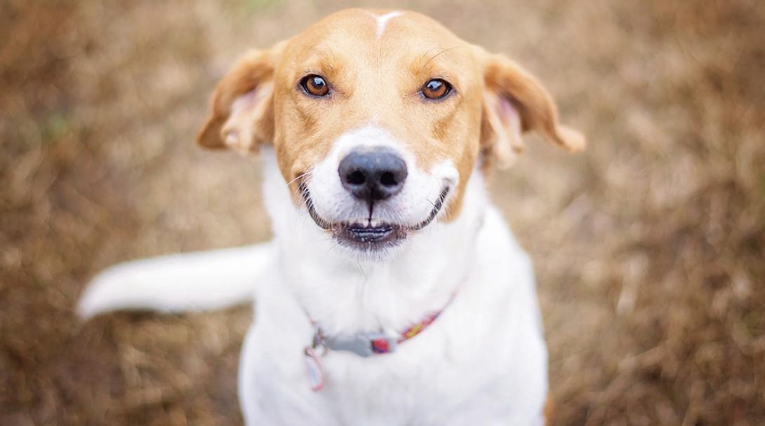 Köpekler Hakkında Herşey Köpekler Ve Cinsel Hayat Wattpad