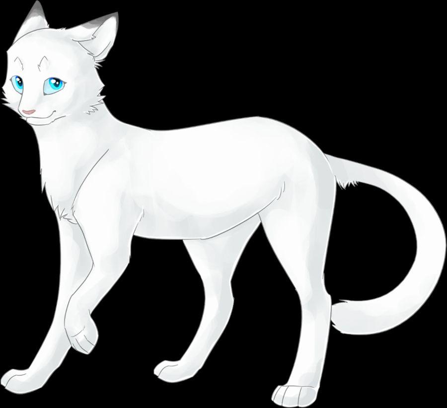 Картинки белой звезды из котов воителей