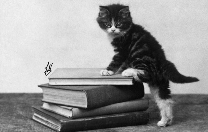 NERA ! C'est quoi cette vieille photo dossier de moi, chaton, lisant des romans à l'eau de rose ? On avait dit que ça restait entre nous !