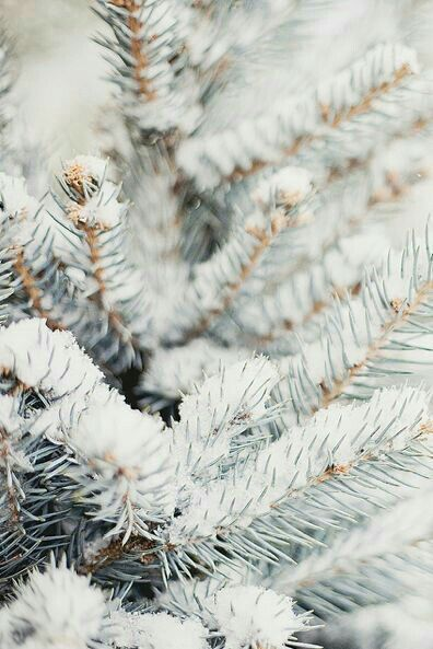 You rime all the pinesWith silvery glaze and frost!How to better describe you?