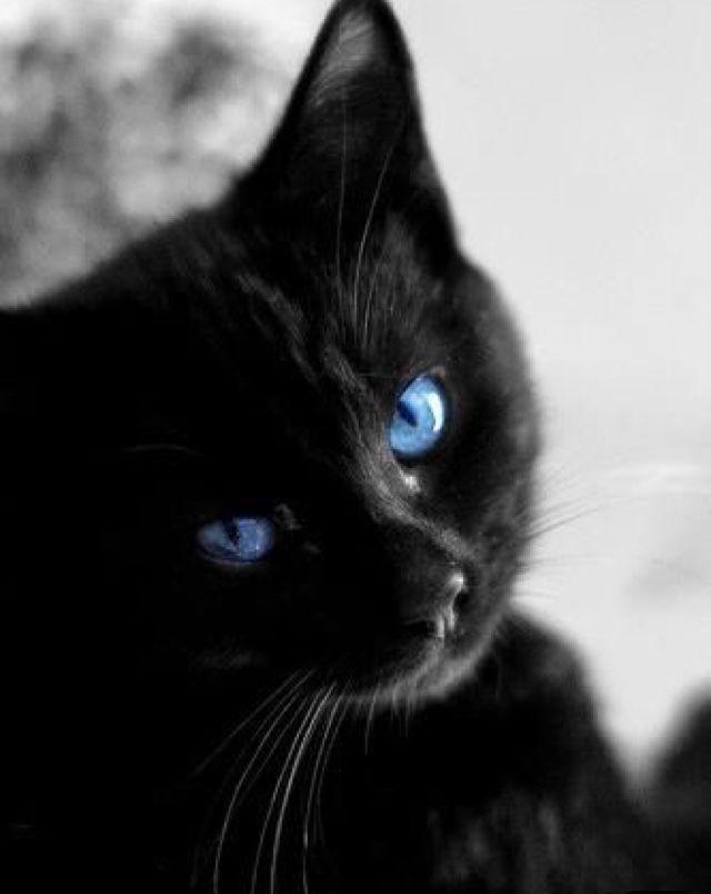 ^ Black tabby