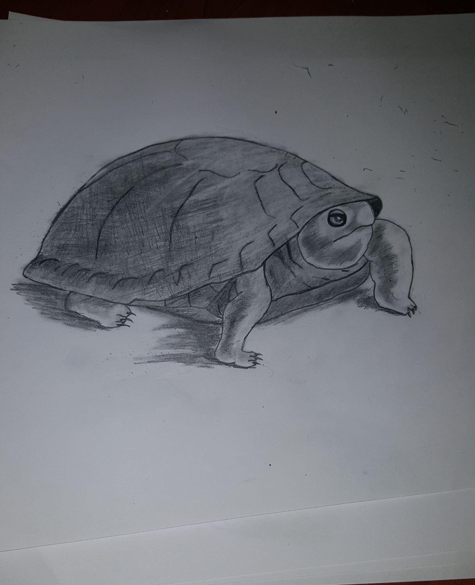 çizimlerim Kaplumbağa çizimim 26 Wattpad