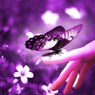 En menos de un segundo todo el florido manto violáceo la imitó y decenas de pétalos aletearon y se movieron a nuestro alrededor