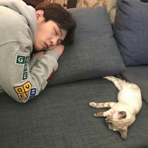 °Tú nunca pensarías que, cuando Changsub conociera ambos se llevarían mal pues al animal casi nadie le agrada