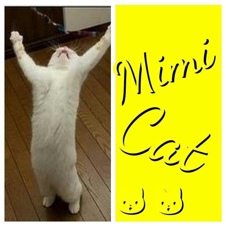 Mimi Cat: Hohoho, Lihatlah dunia, aku dari 40 kg udah turun 20 kg, kerana puasa sebulan! Hohoho