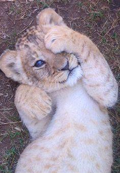 Animal adoption's book #1 - Big cat BABIES!! {5/6 Taken!} - Wattpad